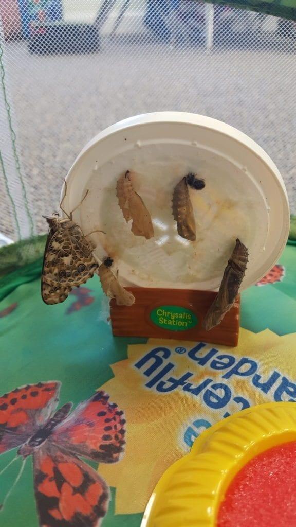Bye, bye, Butterflies!  (And Ladybugs!)